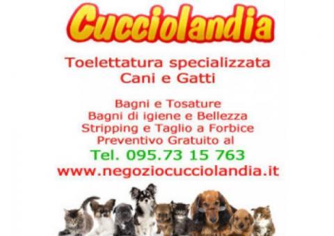 Negozio di animali a Catania